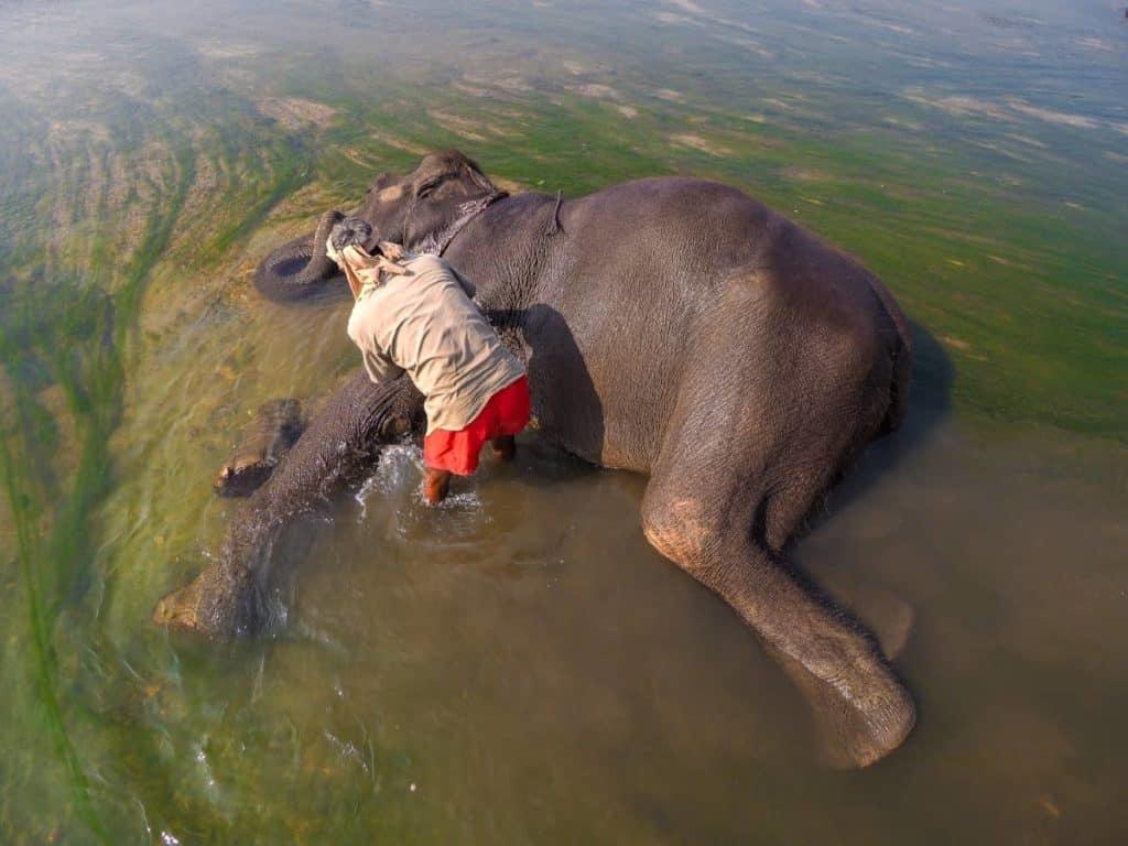 Elephant getting a wash