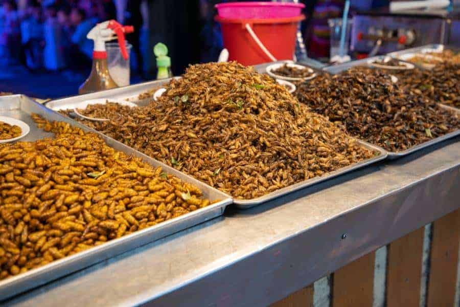 Fried insects street food of asian. Bamboo worm, grasshopper