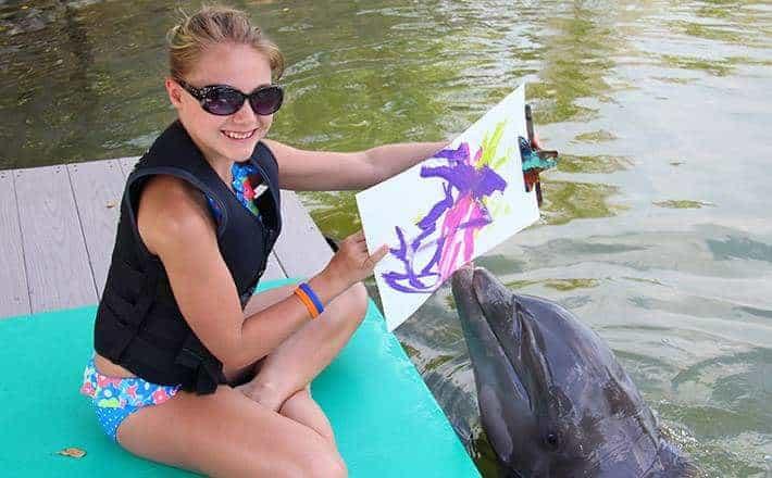 dolphins plus florida paining