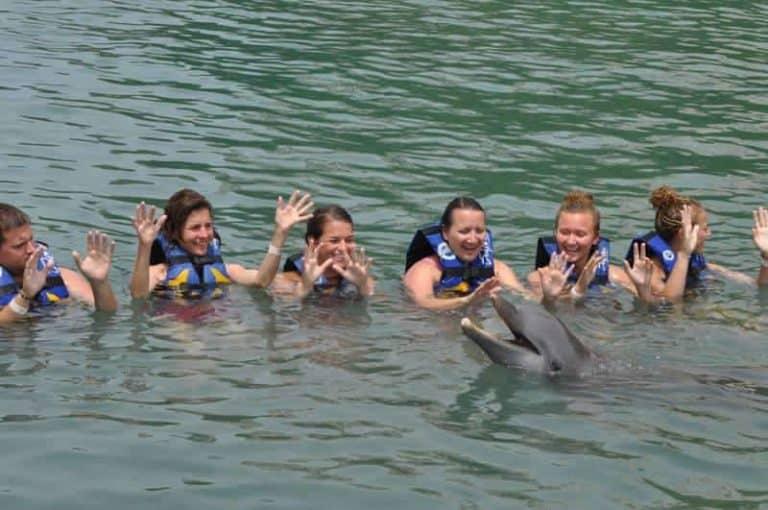 tortola dolphins