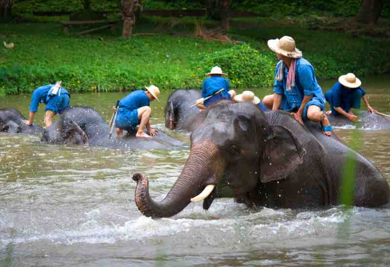 elephants bath at The Thai Elephant Conservation Center