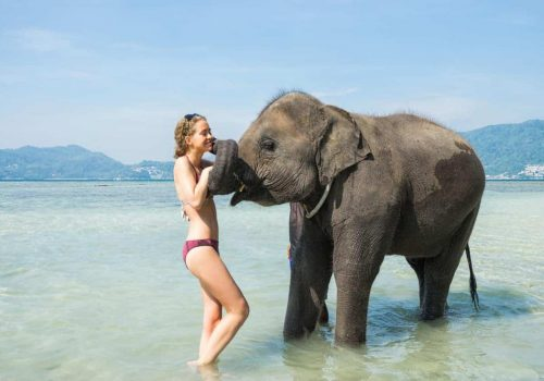 Kissing an Elephant in Thialand
